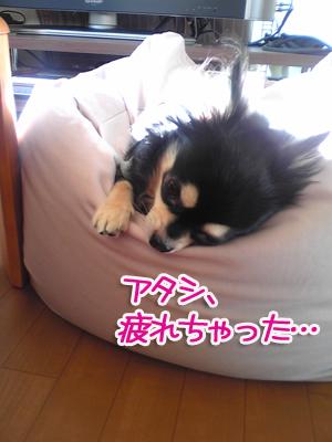 お疲れちゃん。