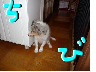 snap_ogurotaronoblog_20091495043.jpg