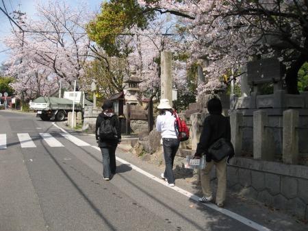 桜遍路旅-1