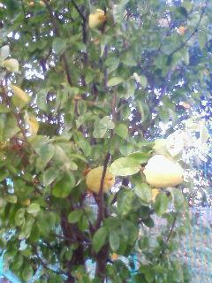 木の実とジャック4