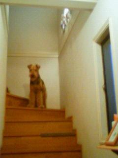 階段ジャック