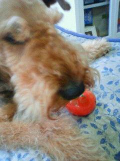トマトジャック3