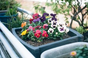 二ヶ領用水の花壇