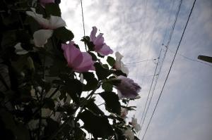 花を見上げる