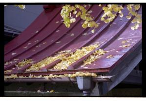 赤い屋根に銀杏