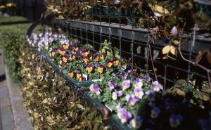 会社前の花壇