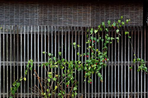 京都らしさ-6