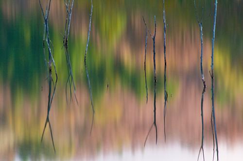海上の森秋-1