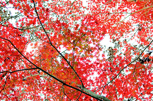 海上の森秋-10