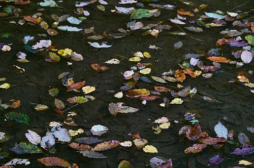 海上の森秋-11