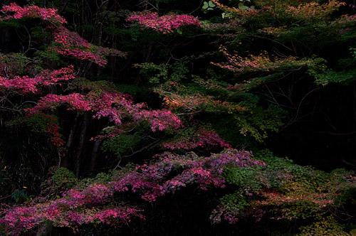 海上の森秋-12