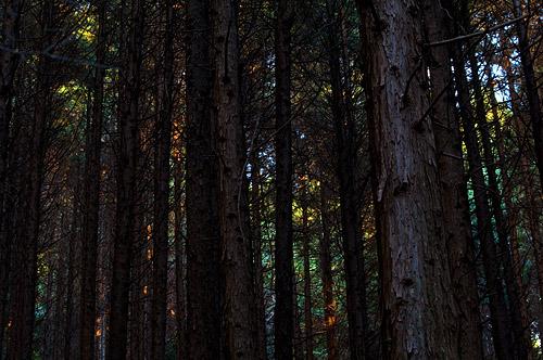 海上の森秋-13
