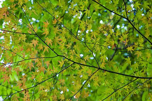 海上の森秋-9