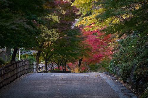 東山動植物園-13
