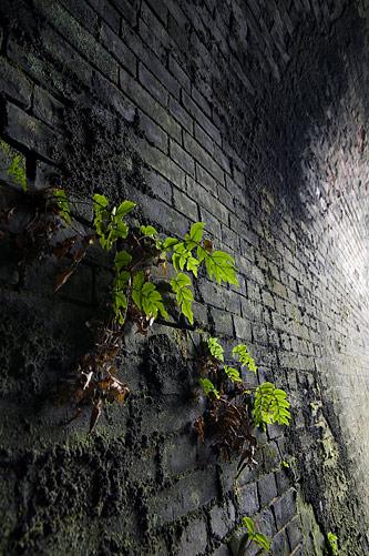 愛岐トンネル1-5