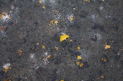 秋の日常-2