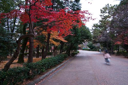 鶴舞公園-6