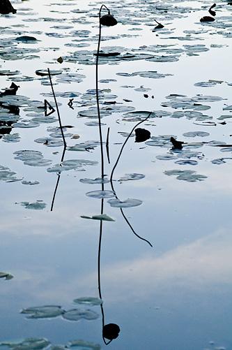 牧野ヶ池-8