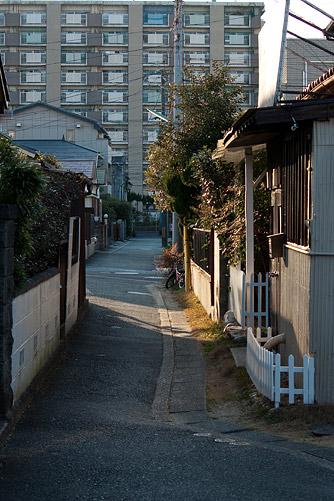 ご近所散歩-1