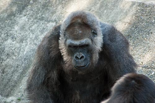 東山動物園1-6