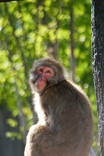 東山動物園2-2