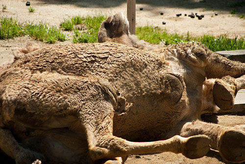 東山動物園2-4