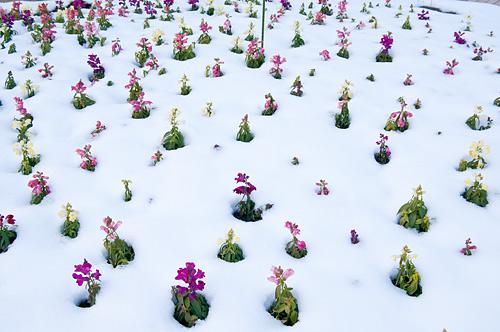 雪の名古屋城1-14