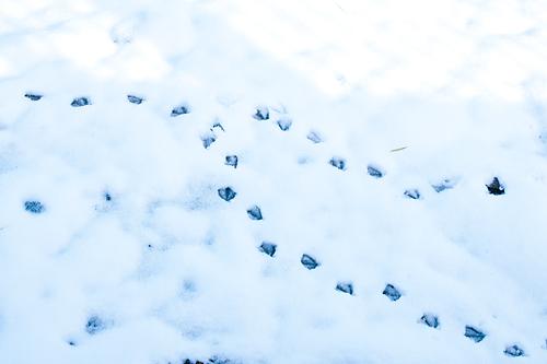 雪の名古屋城1-7