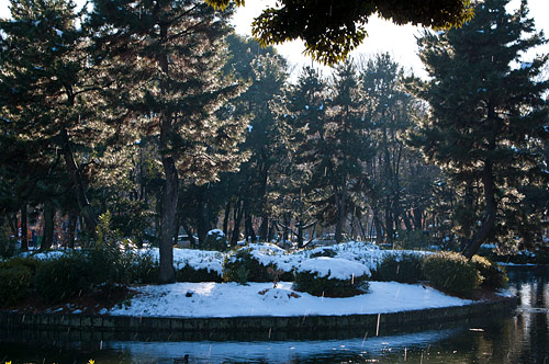 雪の名古屋城2-13