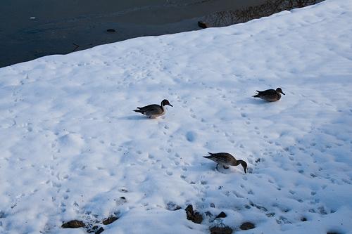 雪の名古屋城2-5