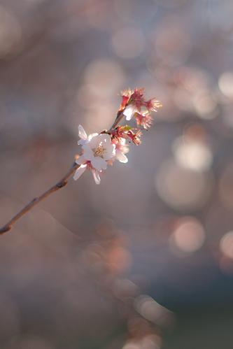 冬から春へ-8
