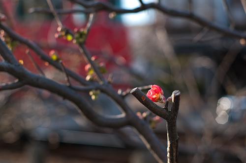 冬から春へ-9