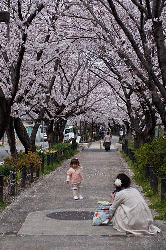桜便り6-5