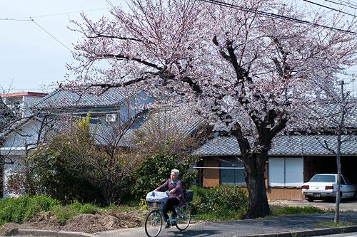桜便り6-8