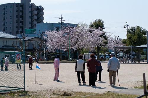 桜便り6-9