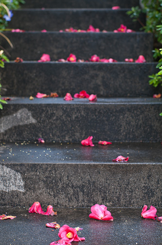 桜便り7-5