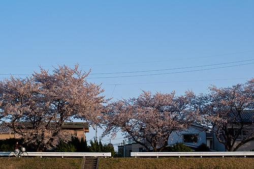 桜便り9-10