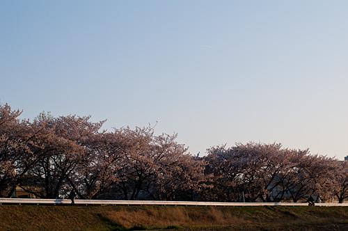 桜便り9-11