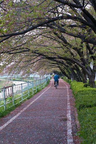 香流川桜-18