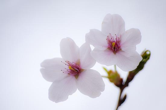 春のモリコロ-4