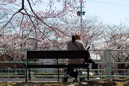 近所桜1-13