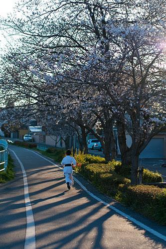 近所桜1-16