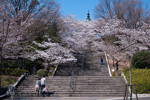 桜便り2-2