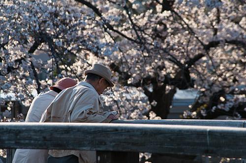 山崎川桜-3