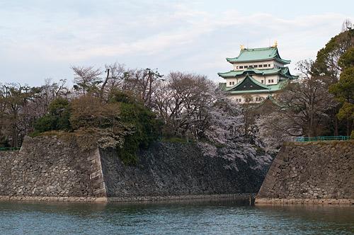 名古屋城桜-3
