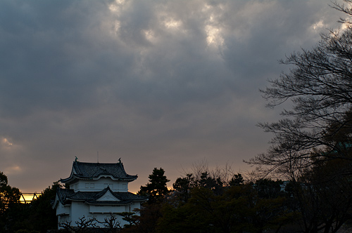 名古屋城桜-5