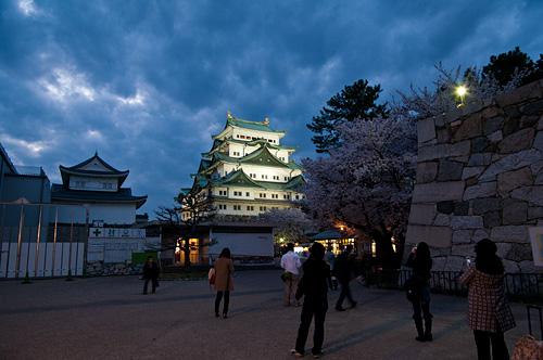 名古屋城桜-8