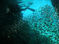 青の洞窟シュノーケリング¥5,000