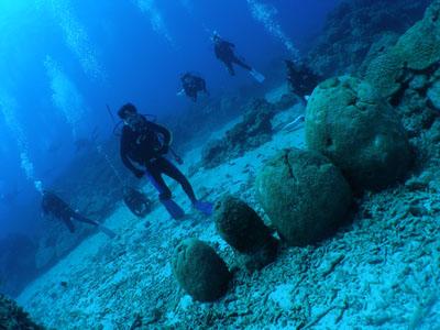 沖縄ダイビングハウスオルオル