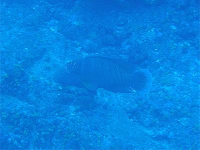 20090104l.jpg